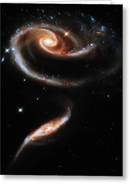 A Rose Made Of Galaxies Greeting Card by Mark Kiver
