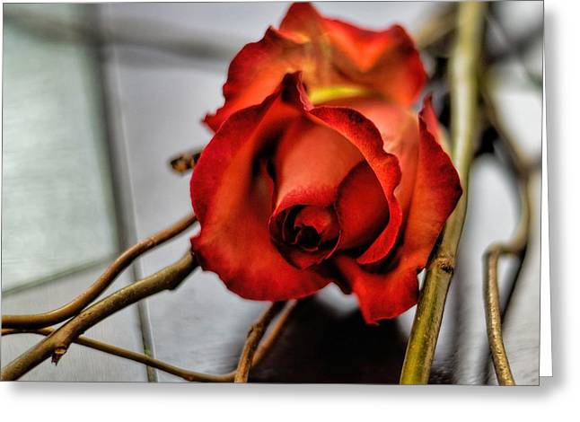 Greeting Card featuring the photograph A Rose On Bamboo by Diana Mary Sharpton