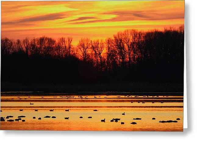 Best Sellers -  - Wildlife Refuge. Greeting Cards - A Scene At Bombay Hook National Greeting Card by George Grall