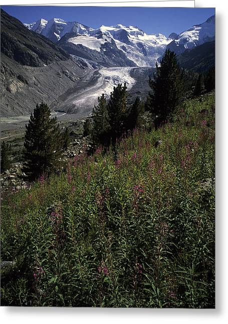 A Scenic View Of The Morteratsch Greeting Card by Taylor S. Kennedy