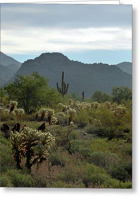 A Scottsdale Vista Greeting Card