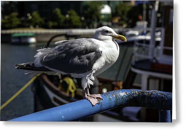 A Seagull Enjoying The View Greeting Card