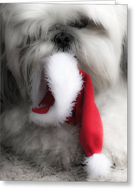 A Shih Tzu Christmas Greeting Card