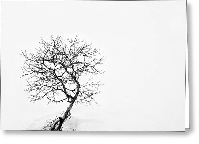 A Simple Tree Greeting Card by Dave Bowman