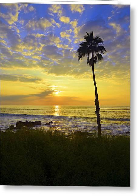 A Single Palm Tree At Kepuhi Beach Greeting Card by Tara Turner
