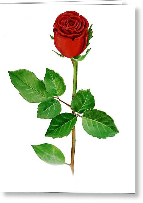 A Single Rose Greeting Card by Irina Sztukowski