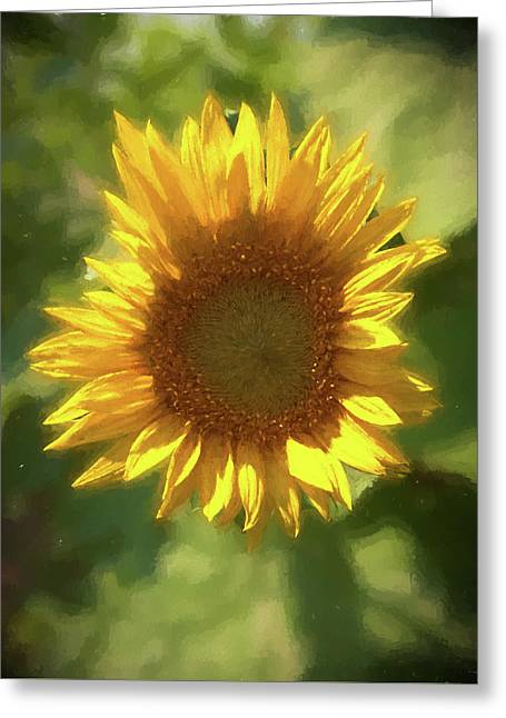 A Single Sunflower Showing It's Beautiful Yellow Color Greeting Card