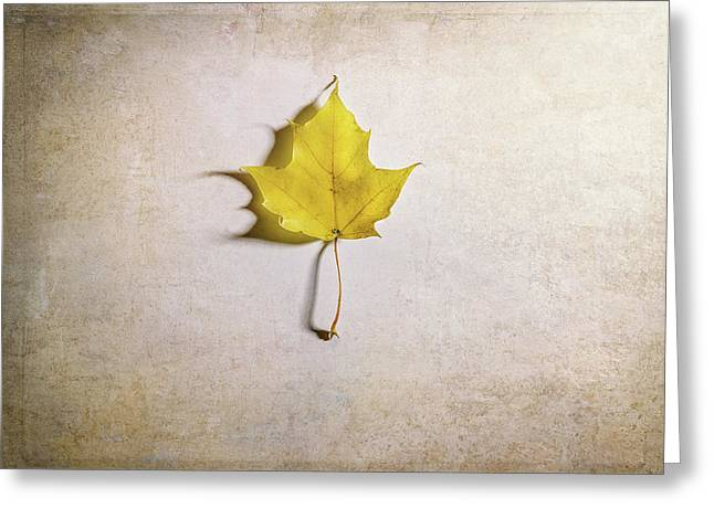 A Single Yellow Maple Leaf Greeting Card by Scott Norris