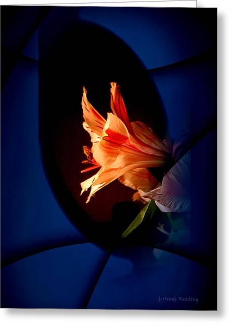 Greeting Card featuring the photograph Delicate Flower by Gerlinde Keating - Galleria GK Keating Associates Inc