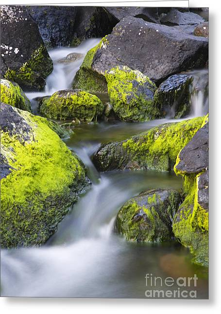 A Small Stream Greeting Card by Tim Grams