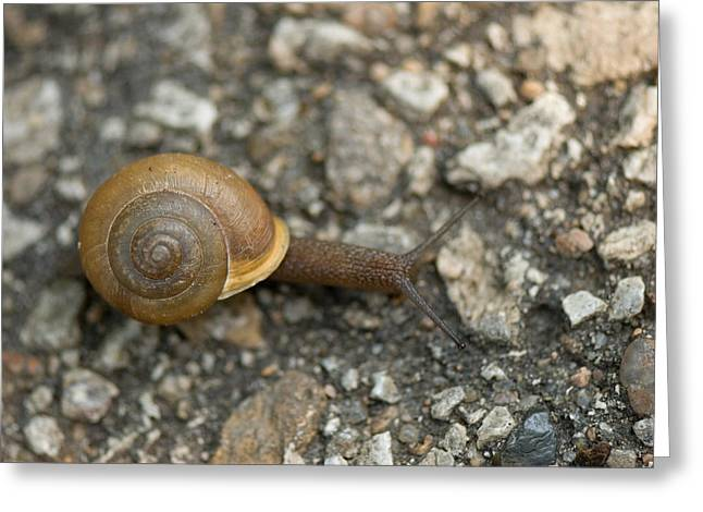 A Snail On A Gravel Path At The Sunset Greeting Card
