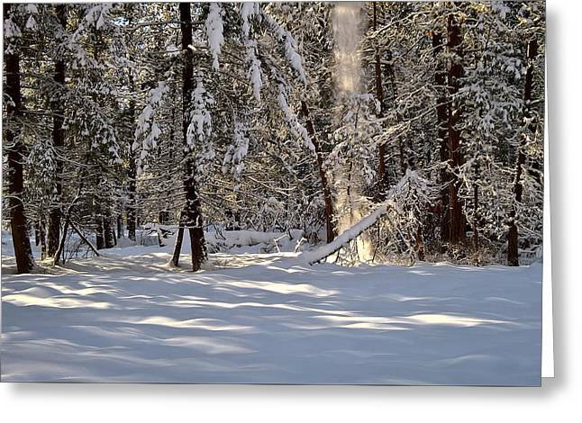 Greeting Card featuring the photograph A Soft Sound In The Forest by Tom Vaughan