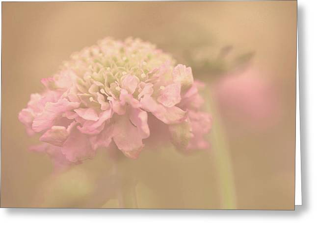 A Soft Touch  Greeting Card by Connie Handscomb