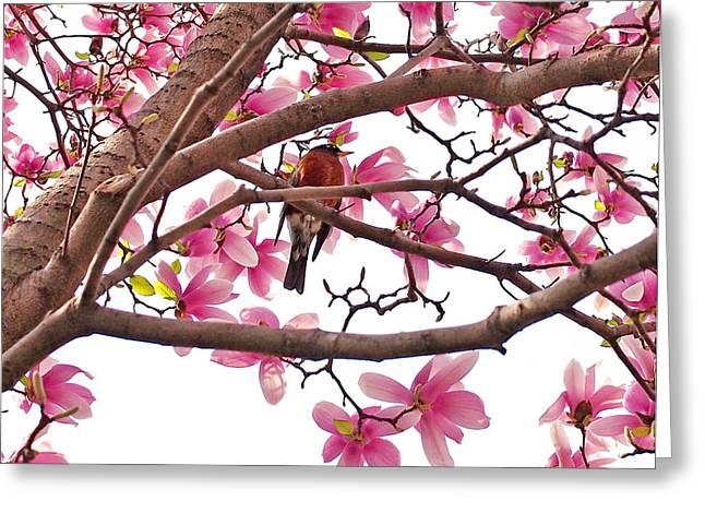 A Songbird In The Magnolia Tree Greeting Card