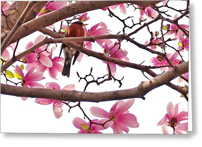 A Songbird In The Magnolia Tree - Square Greeting Card