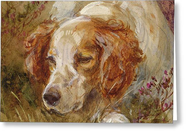 A Spaniel Greeting Card