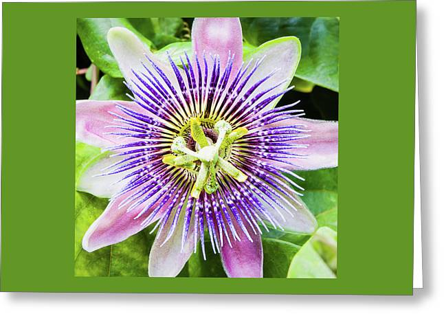 A Special Flower Greeting Card by Dawn Currie
