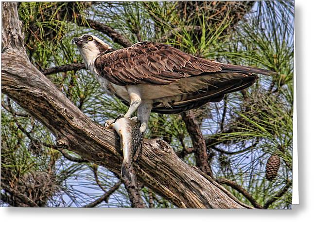 A Speckled Trout Breakfast Greeting Card by HH Photography of Florida