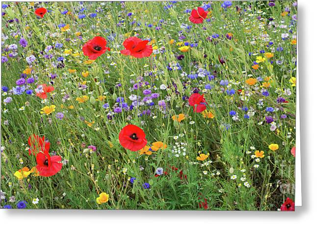 A Splash Of Colour Greeting Card by Tim Gainey
