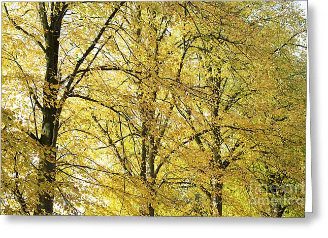 A Splash Of Yellow Greeting Card by Tim Gainey