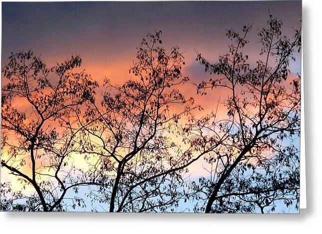 Greeting Card featuring the photograph A Splendid Silhouette by Will Borden