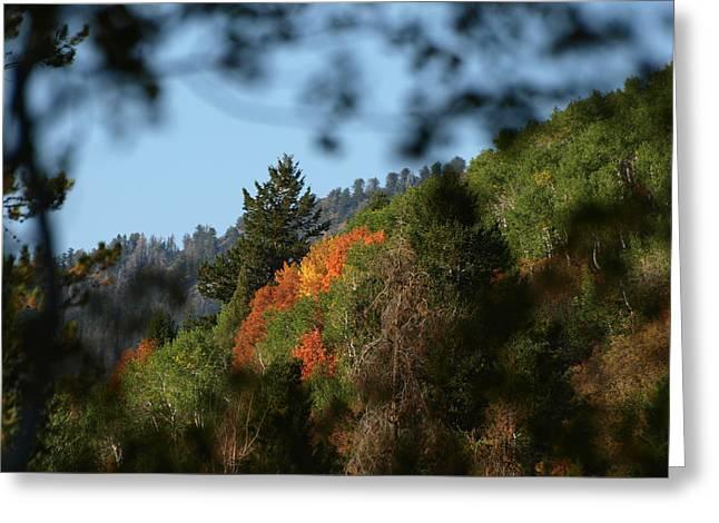 Greeting Card featuring the photograph A Spot Of Fall by DeeLon Merritt