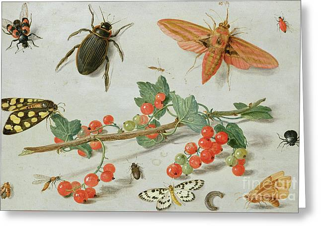 A Sprig Of Redcurrants With An Elephant Hawk Moth, A Magpie Moth And Other Insects, 1657 Greeting Card