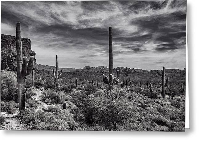 Greeting Card featuring the photograph A Morning Hike In The Superstition In Black And White  by Saija Lehtonen