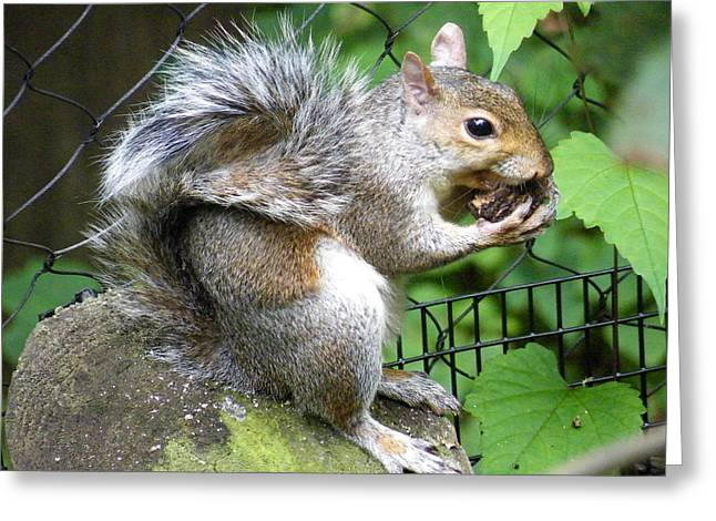 A Squirrelly Portrait Greeting Card