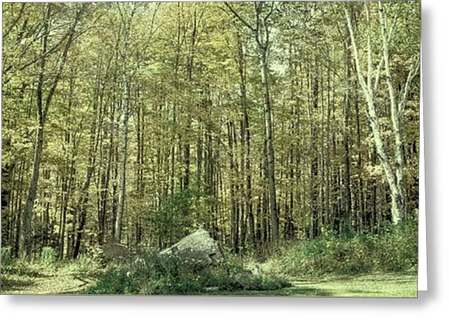 A Stand Of Trees In Autumn Greeting Card by David Patterson