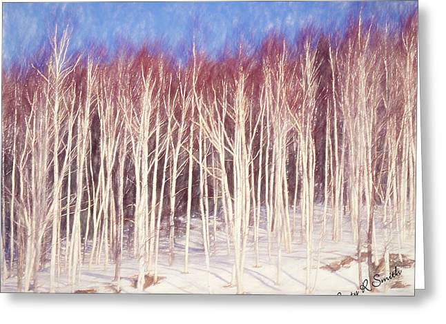A Stand Of White Birch Trees In Winter. Greeting Card