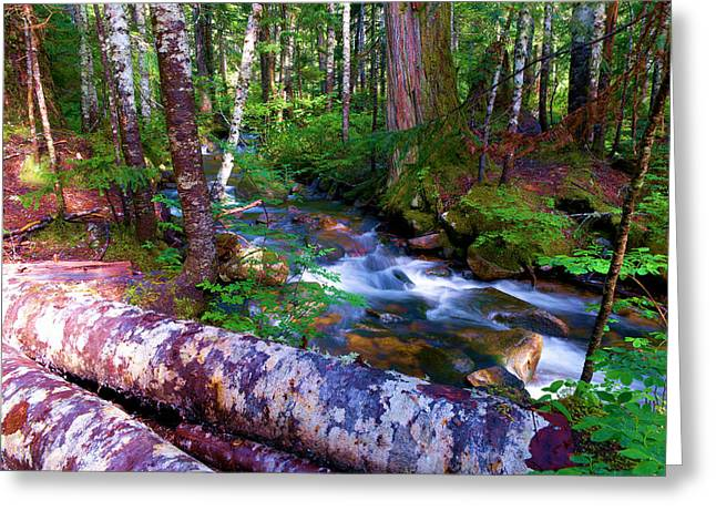 A Stream Through The Forest  Greeting Card by Jeff Swan