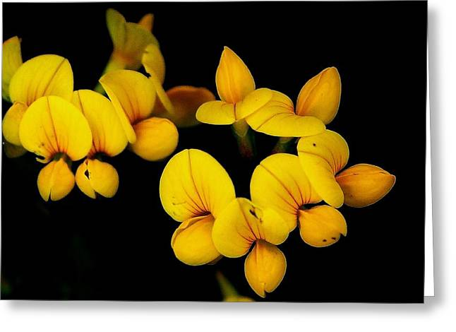 A Study In Yellow Greeting Card by David Lane