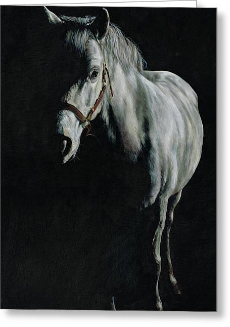 A Study Of A Pony In The Shadows Greeting Card by Richard Mountford