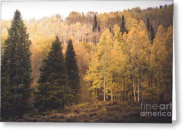 Greeting Card featuring the photograph A Subtle Glow by The Forests Edge Photography - Diane Sandoval