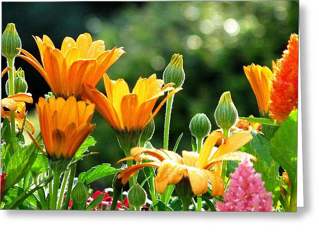 A Summer Celebration Greeting Card by Angela Davies