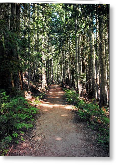 A Sun Lit Trail Through The Forest Greeting Card by Jeff Swan