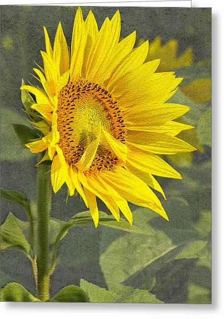 A Sunflower's Prayer Greeting Card