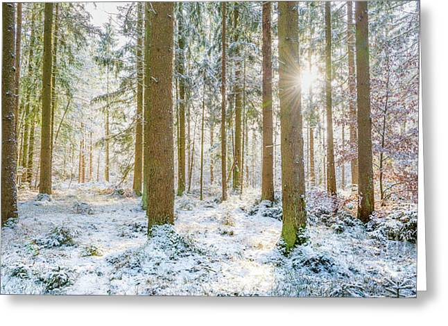 Greeting Card featuring the photograph A Sunny Day In The Winter Forest by Hannes Cmarits