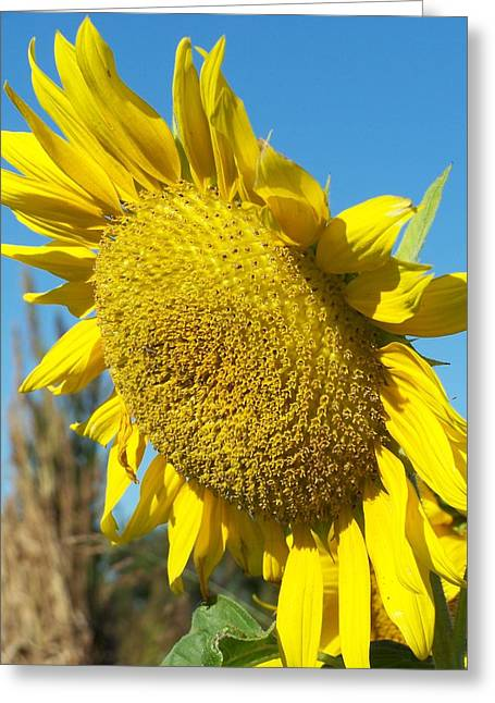 A Sunny Hello Greeting Card by Sandy Collier
