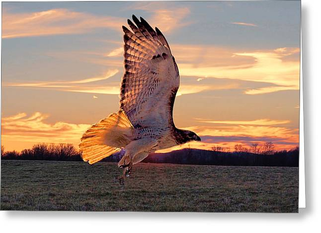 A Sunset Flight Greeting Card