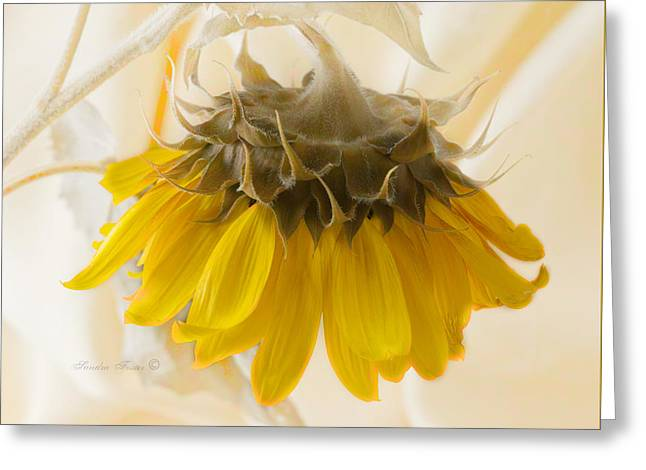A Suspended Sunflower Greeting Card