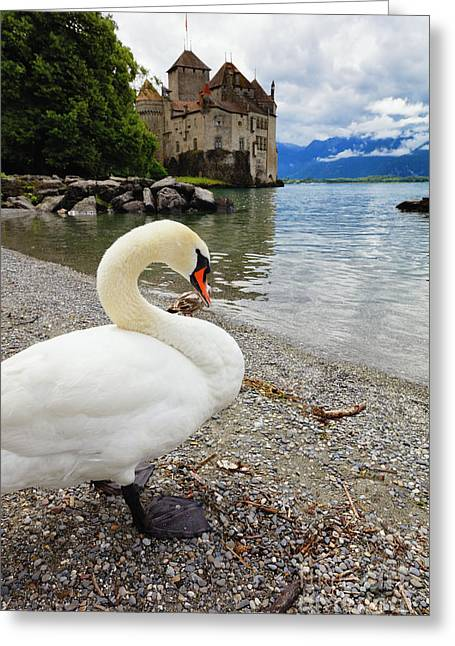 A Swan Standing Along A Lakeshore Greeting Card by George Oze