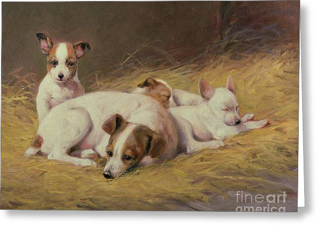 A Terrier With Three Puppies Greeting Card