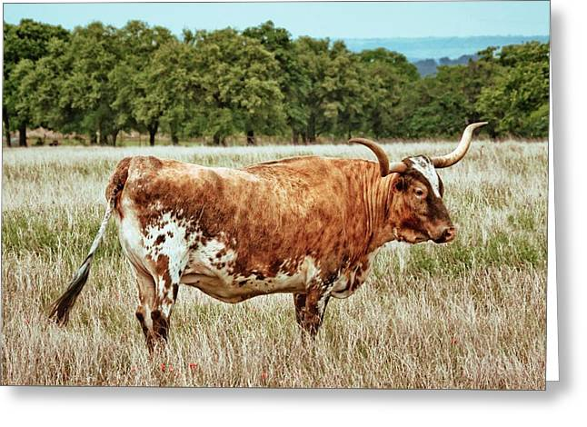 Greeting Card featuring the photograph A Texas Legend by Linda Unger