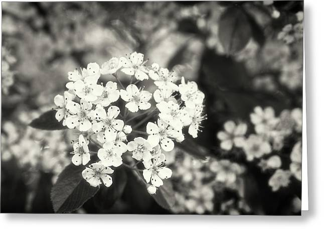 A Thousand Blossoms In Sepia 3x4 Flipped Greeting Card