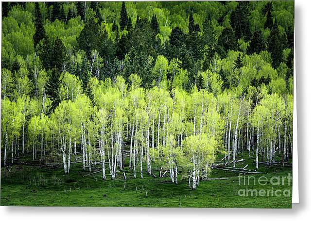 Greeting Card featuring the photograph A Thousand Shades Of Green by The Forests Edge Photography - Diane Sandoval