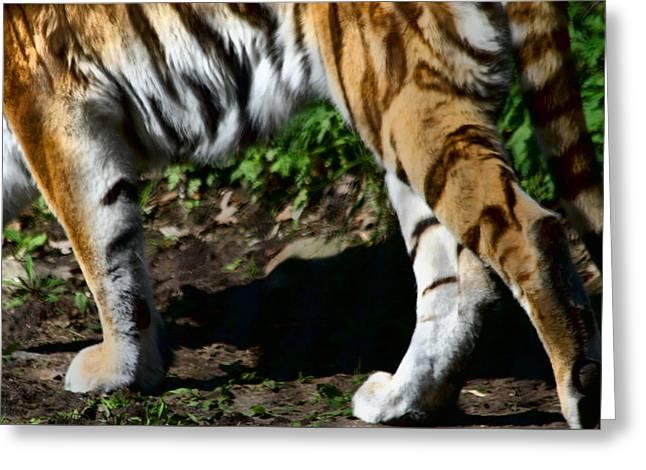 A Tigers Stride Greeting Card by Karol Livote