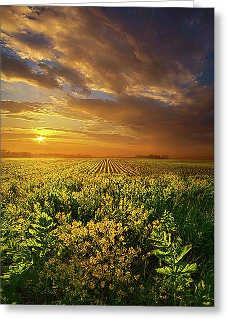 A Time Of Gifts Greeting Card by Phil Koch