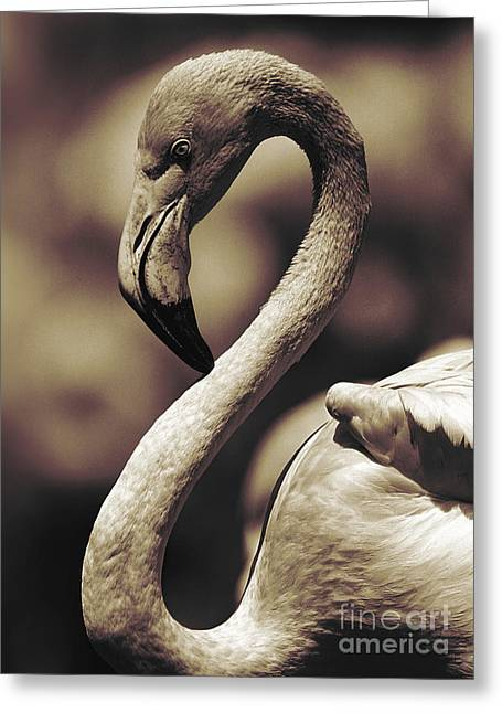 A Toned Tickled Pink Flamingo  Greeting Card